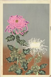 大野麦風/菊のサムネール