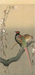 小原古邨/雉のつがいに桜のサムネール